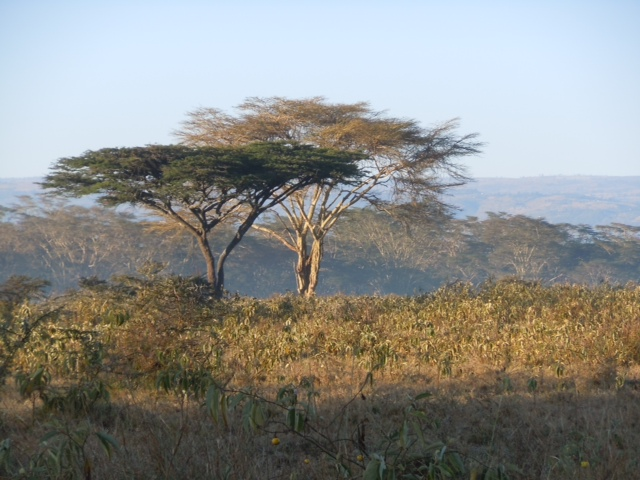Africa_trees