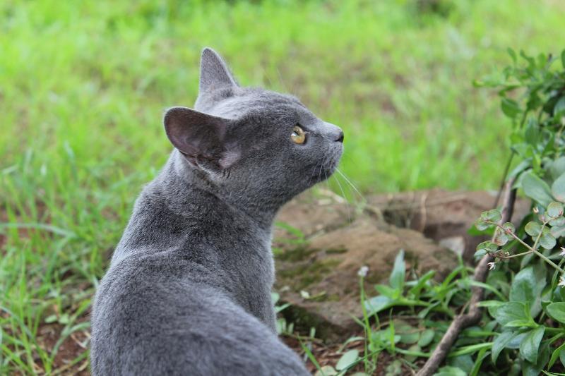 Moshi_cat